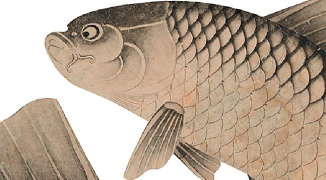 Yeni çıkanlar: Boğaziçi'nde Balık