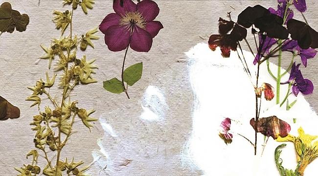 Kitap: Yeniden Doğmak İçin Bir Bitki Çayı Alır mıydınız?