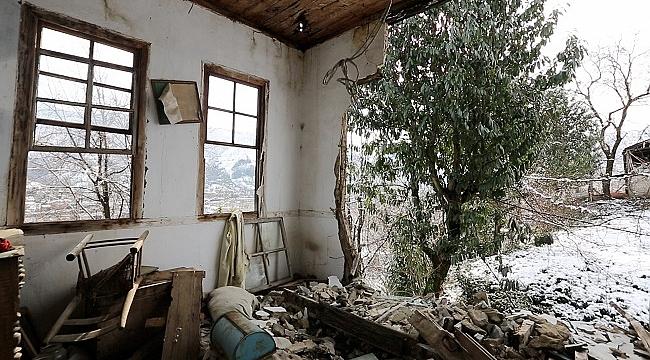 Karadeniz'in mistik ağacı Karayemiş belgesele konu oldu