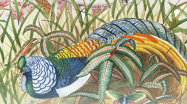 Kuşların Kaf Dağı serüveni sesli kitap haline getirildi