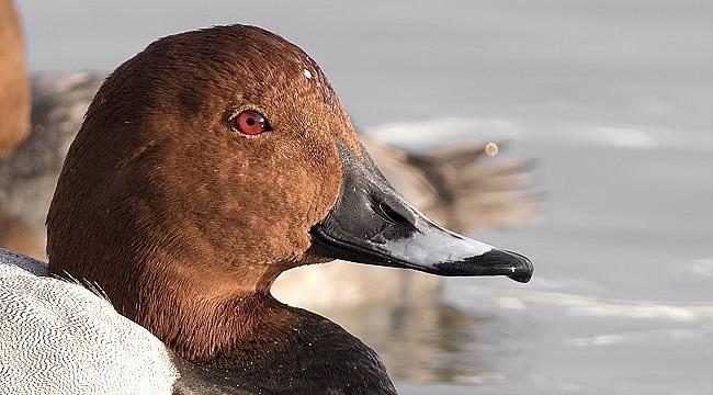 Nesli tehlike altındaki kuşlara ölüm kararı