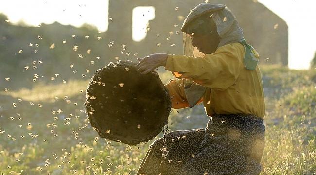 Oscar adayı belgesel Bal Ülkesi, TV'de ilk kez gösterilecek