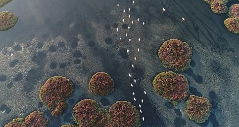Tarkan'dan İzmir'in Gediz Deltası'nın UNESCO Dünya Doğa Mirası olması için Dested